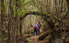 Choose your own custom guided hike on kunanyi / Mt Wellington. Walk in luxury with full gourmet catering and your own local guide. Hiking Tours, Tasmania, Walking Tour, Museums, Wilderness, Galleries, Catering, Wine, Luxury