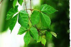 Park, Leaf, Plant, Nature, Kinds Of Food, Tree #park, #leaf, #plant, #nature, #kindsoffood, #tree