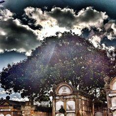 """""""El árbol de los recuerdos #instagramyourcity #bogota @socialmediaweek @smwbog #colombia #igerscolombia #doctorchapu"""" by @doctorchapu"""