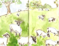 2016-05-20 The newly shorn sheep speed grazing through the field and gone in a flash