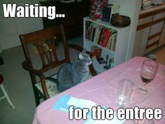 Waiting... for the entree (courtesy of @Pinstamatic http://pinstamatic.com). Petie cat is always waiting to be served! LOL Gotta love this cat...he went from a rescue to a king in no time!!! --Kaeli Ferguson #mumsocialmedia