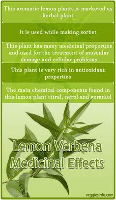 Lemon Verbena Medicinal Facts And Effects | VeggiesInfo #Lemon #Verbena #Lemonverbena #Citrus #Effects #Health #Medicinal #Facts #Spices #Veggiesinfo To know more Medicinal facts visit here: http://veggiesinfo.com/lemon-verbena/
