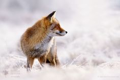 """The Catcher in the Rime - <a href=""""http://www.roeselienraimond.com"""">Roeselienraimond.com</a> 
