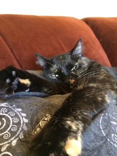 Sassy Hoaglan tortie cat