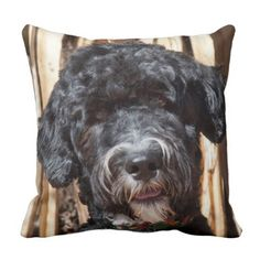 USA, New Mexico. Portuguese Water Dog Portrait Throw Pillow