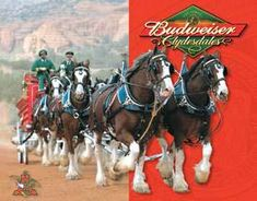 Pub Signs, Beer Signs, Pretty Horses, Beautiful Horses, Big Horses, Clydesdale Horses Budweiser, Vintage Tin Signs, Retro Vintage, Vintage Looks