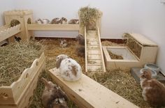 This would be so cool to be able to have a room set up like this for rabbits ... Great set up from http://www.tsvlev.de/