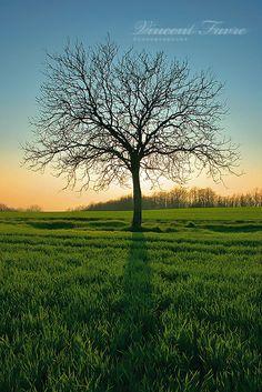 My tree... by vincentfavre.deviantart.com on @deviantART