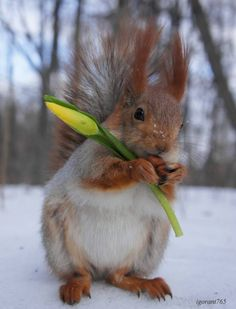 Yes, you are cute...but please STOP EATING MY CROCUS AND DAFFODIL BULBS!