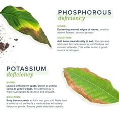 Hydroponic Gardening Fixes for Nutrient Deficient Soil - The Permaculture Research Institute Hydroponic Gardening, Hydroponics, Gardening Tips, Organic Gardening, Decoration Plante, Plant Diseases, Inside Plants, Plant Health, Garden Pests