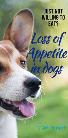 Loss of appetite in dogs – Is my Fur baby sick or just not willing to eat? Sick Baby, Sick Dog, Loss Of Dog, Dog Clippers, Dog Grooming Tips, Group Of Dogs, Dog Books, Dog List, Dog Insurance