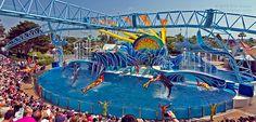 Blue Horizons show at SeaWorld San Diego. #seaworld #themeparks #dolphins