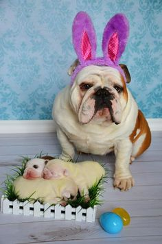 It's the Easter Bully!