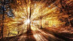 Amazing Sunrise Through The Forest