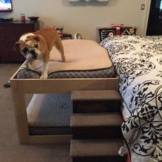 Pet bunk bed with steps: Great idea for bed & steps. In this photo, at the foot of owner's bed. Love the padded bunk bed. Great for cats or dogs. Submitted by owner who purchased steps Bunk Bed Steps, Dog Bunk Beds, Dog Steps For Bed, Pallet Dog Beds, Pet Steps, Pet Stairs For Bed, Dog Ramp For Bed, Doggie Beds, Dog Stairs