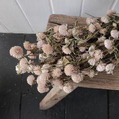Dried flowers – reste
