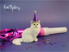 Party Pooper is a one-of-a-kind, miniature 1:12 Persian cat sculpture created by hand using polymer clay and delicate wire armature in the legs, neck and tail.  His tail is gently pose-able.&n...
