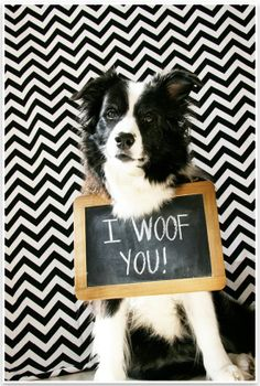 Omg Soda, you are the cutest!! 5 Fun  Easy Home Pet Photography Ideas | Pretty Fluffy