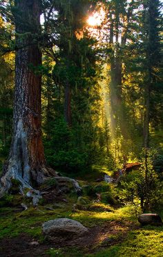 Taiga forest morning beam, Ergaki, Siberia, Russia Yes, this one goes on the vision board as well!