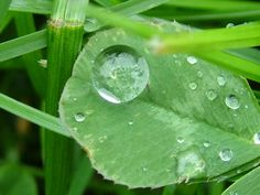 most beautiful raindrops pictures (3)