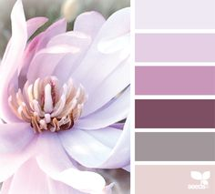 magnolia hues color palette from Design Seeds Colour Pallette, Colour Schemes, Color Patterns, Design Seeds, Magnolia Colors, Magnolia Design, Magnolia Sky, Boutique Interior, Color Balance