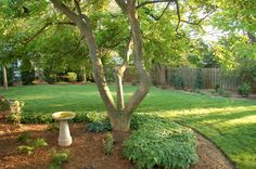 Natural shovel cut edge -- Landscaping.