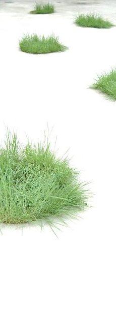 芝生ポンポン