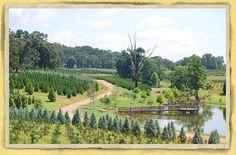Wholesale Retail Landscape Plant Nursery North GA Kinsey Family Farm Directions