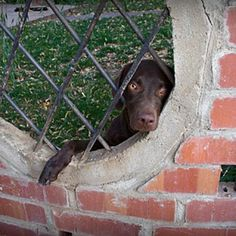 Separation Anxiety in Dogs- How to Help.