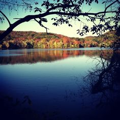 Radnor Lake is a woodsy oasis, minutes from downtown and a perfect place to meet with friends and family. A paved road circles over half of the water and the other half is a well-maintained trail. If you're up for a more physical challenge, hiking trails wind up and down all through the park. Don't be surprised with the wildlife out there either! I once stood a few feet away from an owl, perched on a wooden beam in the middle of the path. A park ranger standing near said the owl lost it's…
