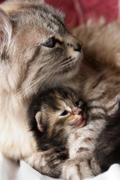"Mommy Kitty telling a story: ""And then the baby kitty fell asleep in her mommy's arms."""