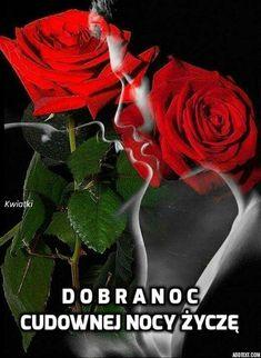 Good Evening Greetings, Haiku, Plants, Kara, Roses, Disney, Fotografia, Flowers, Good Night