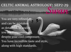 Celtic Animal Astrology - Swan - September 2 to 29 Celtic Zodiac Signs, Celtic Signs, Celtic Astrology, Astrology Zodiac, Astrology Numerology, Celtic Symbols, Animal Meanings, Animal Symbolism, Spirit Animal Totem