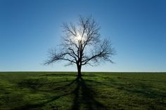 15 wonderfully satisfying photographs to put your tired mind to rest Great Photos, Cool Pictures, I Stand Alone, Fatigue, Standing Alone, Vash, Tree Of Life, True Beauty, Amazing Nature