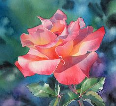 Pink Ruffles by Barbara Fox