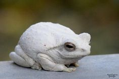Easy Cat Cages Made Outdoors or Indoor - meowlogy Funny Frogs, Cute Frogs, Funny Birds, Amazing Animals, Animals Beautiful, Rare Albino Animals, Melanism, Art Chinois, Frog Pictures