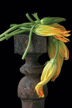 Draped Squash Blossoms