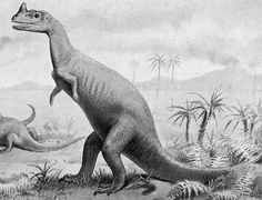 Ceratosaurus.jpg (578×441) - Dinosauria, Saurischia, Theropoda, Neotheropoda, Ceratosauria, Ceratosauridae. Avant 1923.
