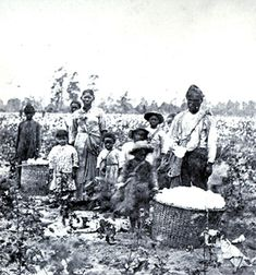 Slaves working in The Cotton Fields