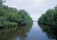 La desembocadura del río Sinú formó un delta que por su carácter estuarino, posibilita el desarrollo de tupidos manglares.