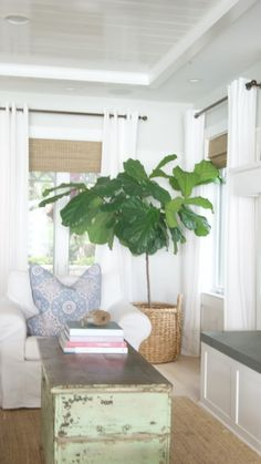 Fiddle Leaf, ceiling, wall color is BM Gray Owl, white trim, white window panels, natural shades, batten board, seagrass, slip covered chair, wood elements
