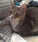 Kitties & Pitties | Adopt