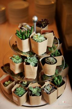 succulent party wedding favors, take home plants Cacti And Succulents, Planting Succulents, Potted Flowers, Growing Succulents, Succulent Party Favors, Succulent Cakes, Succulent Display, Succulent Ideas, Succulent Gifts