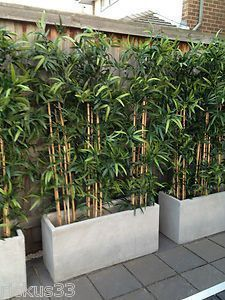bamboo planter box great idea to cover garage wall poolside. bamboo planter box great idea to cover garage wall poolside. … bamboo planter box great idea to cover garage wall poolside. Back Gardens, Small Gardens, Outdoor Gardens, Bamboo Planter, Potted Bamboo, Bamboo Box, Concrete Planters, Bamboo Wall, Outdoor Wall Planters