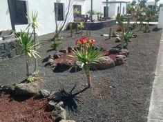 Lanzarote Garden
