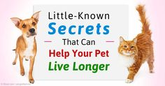 Factors that influence a pet's longevity include breeding, diet, vaccinations, environmental toxins, and sterilization. http://healthypets.mercola.com/sites/healthypets/archive/2015/10/24/factors-affecting-pet-lifespan.aspx