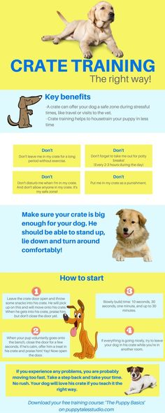 Dog Training Crate training, the right way! Teach your dog to be in his… - Puppies! - Dog Training Crate training, the right way! Teach your dog to be in his… - Puppy Training Tips, Training Your Dog, Agility Training, Potty Training, Training Classes, Training Collar, Training Academy, Training Videos, Dog Agility