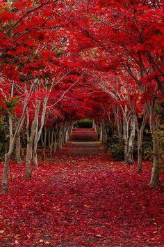Crimson Forest Hokkaido,Japan