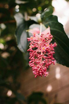 Botanical Atlanta