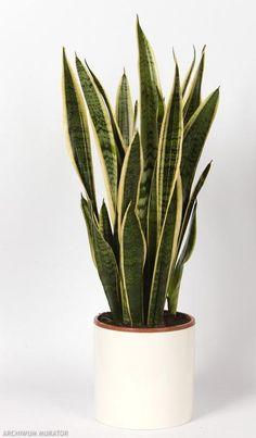 Modne rośliny doniczkowe - 7 kwiatów doniczkowych do nowoczesnego wnętrza